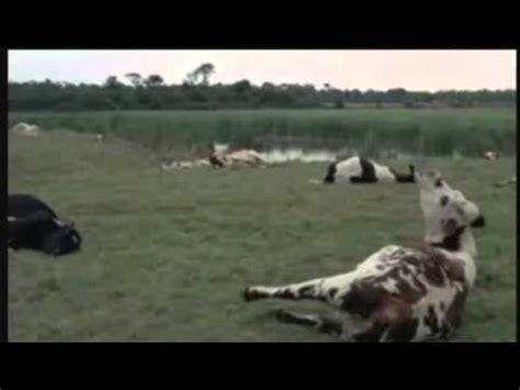 youtube jean gabin film complet la horse la horse 1970 bande annonce youtube