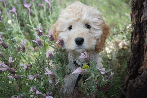 Pflanzen Die Hunde Nicht Mö by Kennt Ihr Alle Pflanzen Die Bei Euch Im Garten Wachsen
