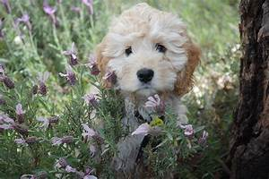 Welche Pflanzen Sind Für Hunde Giftig : kennt ihr alle pflanzen die bei euch im garten wachsen und wisst ihr welche davon giftig sind ~ Watch28wear.com Haus und Dekorationen