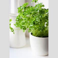 The 9 Easiest Herbs To Grow Indoors  Gardens, Frozen And Herbs Garden