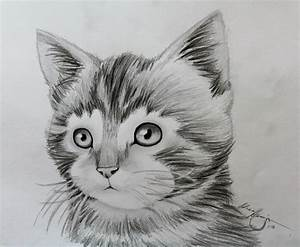 Awesome Drawings Of Animals | fashionplaceface.com