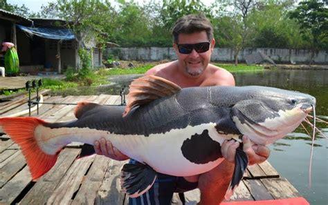 catfish fish tail record fishing biggest caught largest lake giant huge ever amazon redtail fishes pirarara tree monster lagoon palm