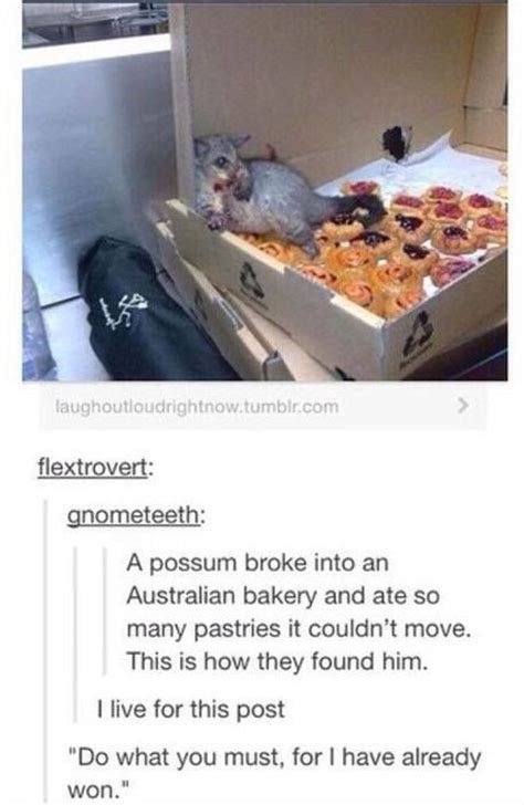 funny things won already must stuff hilarious memes cute possum animals australian text animal silly posts quotes he georgetakei uploaded