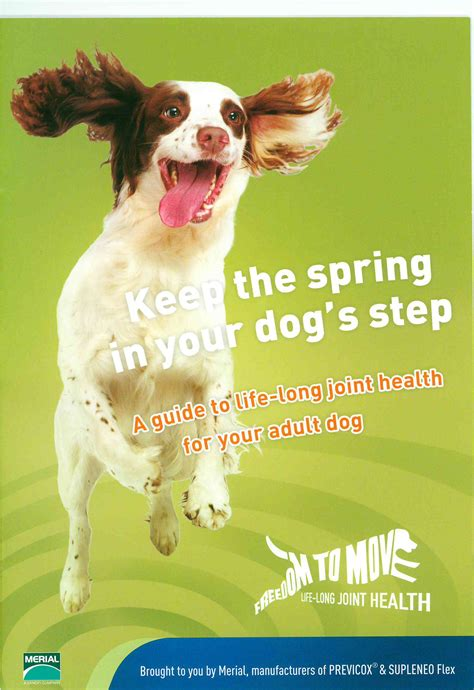 Keeping The Spring In Your Dogs Step Ark Veterinary Centre
