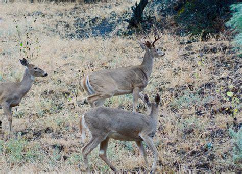 2018 Outlook Hunters Should Have Fairtoexcellent Deer