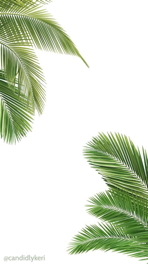 Palm Wallpapers For Desktop   Collection 12  Wallpapers