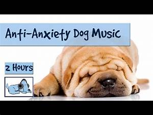 dog puppies video funnydogtv With anti anxiety dog music