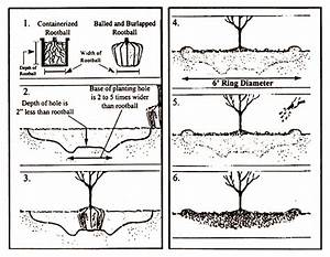Summary Planting Diagram