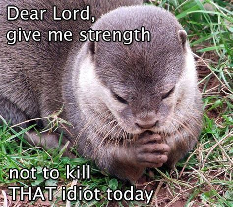 Lord Help Me Meme - dear lord give me strength not to kill that idiot funny otter looks like praying laughter