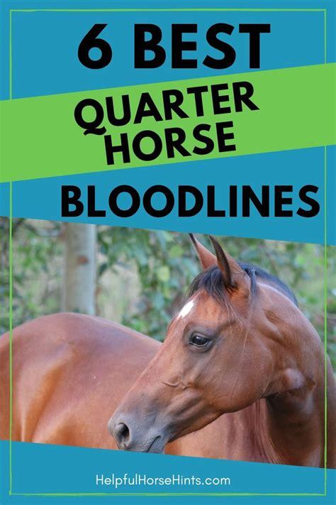 horse quarter horses bloodlines breed helpfulhorsehints roan most