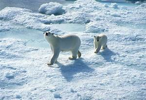 Canadian Cruises, Tours & Travel Info | ExpeditionTrips  Arctic
