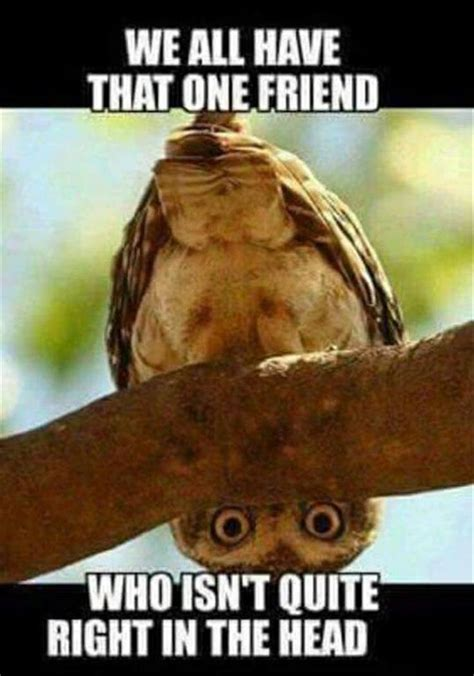 Hysterical Memes - 149 best funny bird memes images on pinterest funny animals funny animal and funny animal pics