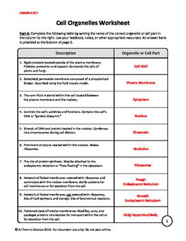 cell organelles worksheet by a thom ic science tpt