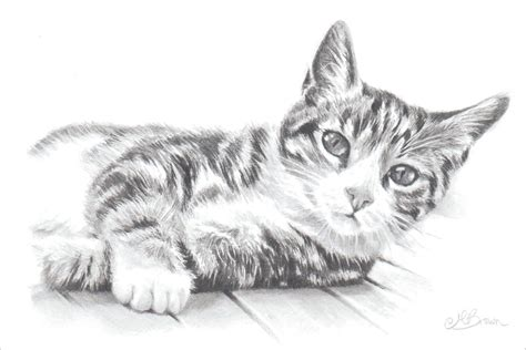 Tabby Cat Cat Art Print Pencil Drawing Of A Cat Gift For
