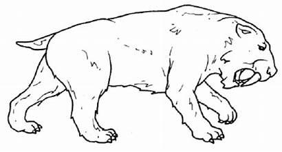 Colorear Tigre Dibujos Dientes Sable Prehistoricos Disegni
