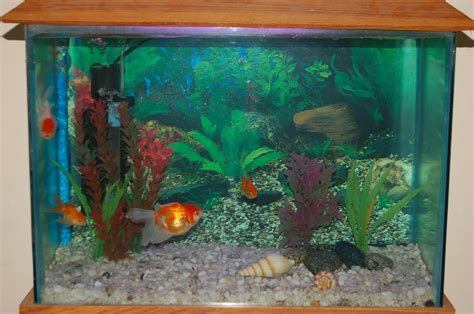 two fish tanks aquarium recipeapart