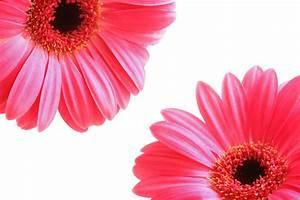 Free Images : blossom, leaf, petal, bloom, decoration ...