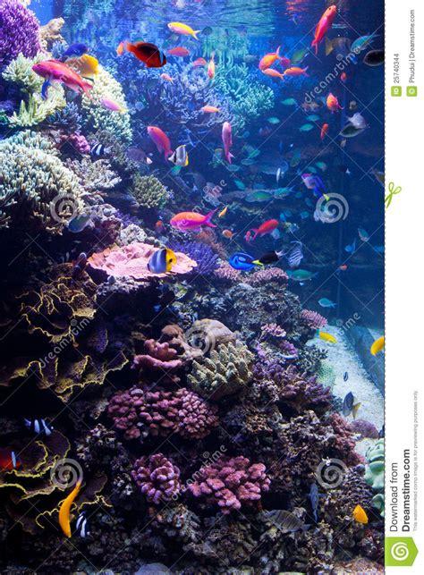 poisson aquarium eau de mer aquarium d eau de mer avec les poissons tropicaux photo stock image 25740344