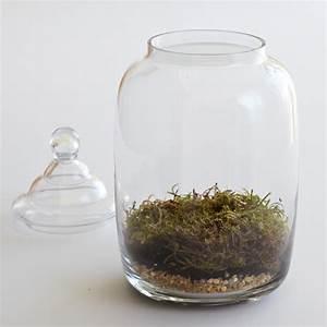Sphagnum Moss Terrarium | www.imgkid.com - The Image Kid ...