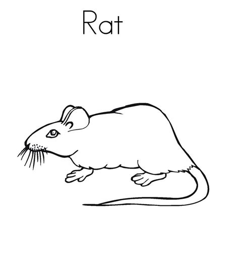 Coloring Pictures by Free Printable Rat Coloring Pages For