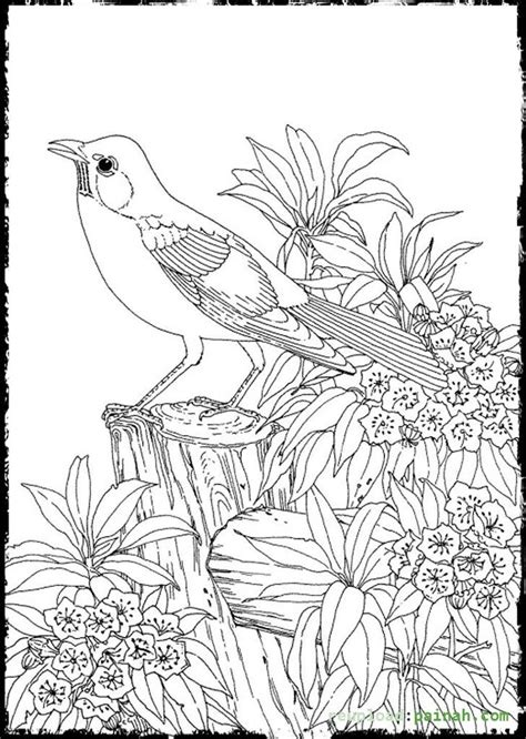 Advanced Coloring Pages for Adults Bird Cute | colouring