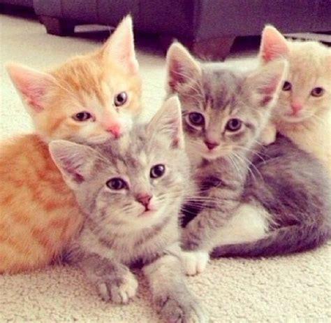les images de chaton mignon qui vont vous donner un grand