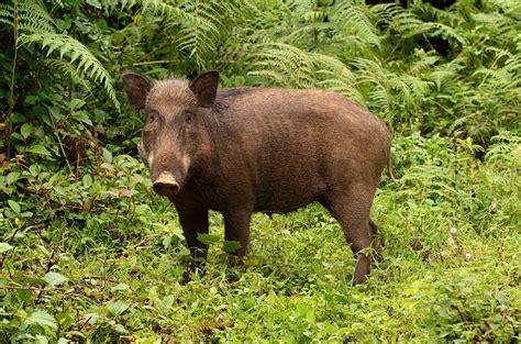 megafauna lifegate animals