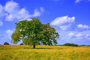 Walnussbaum Selber Pflanzen : walnussbaum foto bild pflanzen pilze flechten ~ Michelbontemps.com Haus und Dekorationen