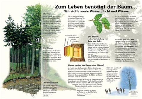 Was Braucht Ein by Zum Leben Ben 246 Tigt Der Baum Natur Im Bild Lehrtafeln F 252 R