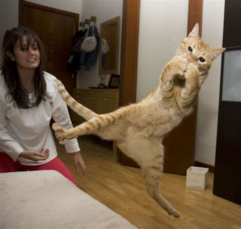 jumping cats  totally   ninjas