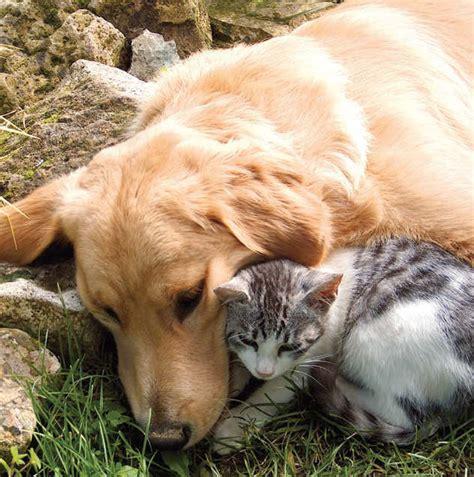 hund und katze aneinander gewoehnen leonardo