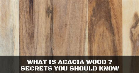 What Is Acacia Wood? Secrets You Should Know  Repairdaily