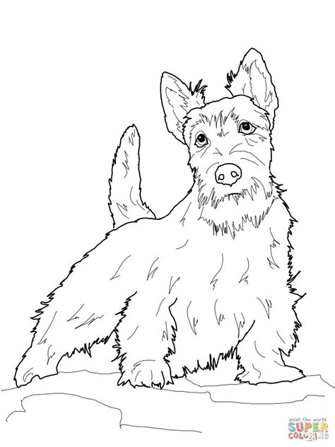 scottish terrier coloring page  printable coloring pages