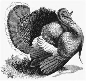 turkey drawing reusableart