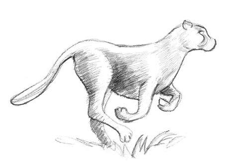draw  cheetah step  step