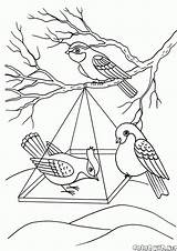 Coloring Birds Feeder Pages Colorkid Winter sketch template