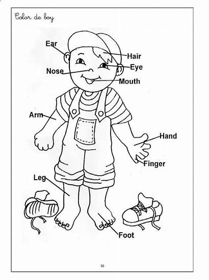 Preschool Coloring Parts Human Printables Worksheets Toddlers