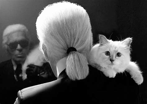 karl lagerfelds cat