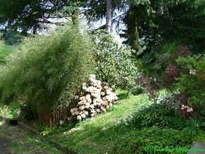 Bambus Zurückschneiden Frühjahr : fargesia jiuzhaigou 1 ~ Whattoseeinmadrid.com Haus und Dekorationen