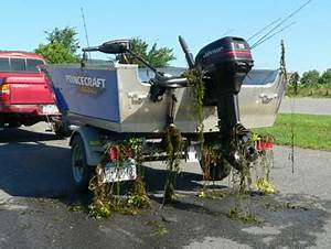Aquatic invasive plants and animals hitch a ride on your ...