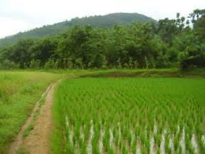 paddy fields a quest on overdrive