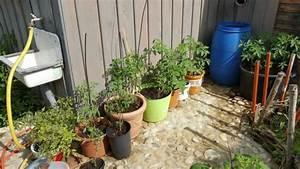 Tomaten Balkon Kübel : tomatenanbau auf dem balkon ~ Yasmunasinghe.com Haus und Dekorationen