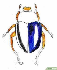 How to Draw a Scarab Beetle: 9 Steps (with Pictures) - wikiHow