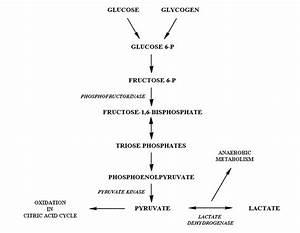 New Glycolysis Quiz