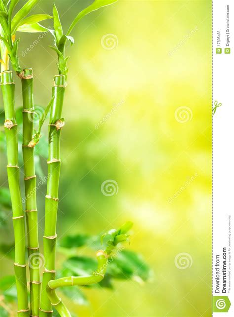 green spa bamboo background stock photo image