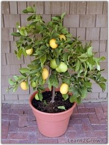 growing orange tree pics about space