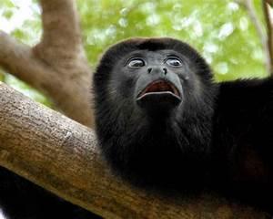 Mono negro 1280x1024 :: Fondos de pantalla y wallpapers