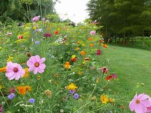 Graines Fleurs Des Champs : prairie fleurie graines de fleurs m lange de fleurs belle des champs ~ Melissatoandfro.com Idées de Décoration