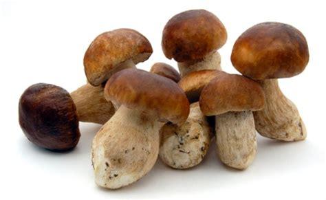 porcini mushrooms porcini mushrooms frozen 2 2 lbs buy at marky s gourmet store