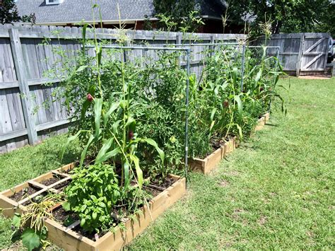 How Will Vegetable Gardening In South